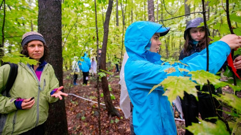 Biology students work in nearby woods to gather specimens from tree leaves.