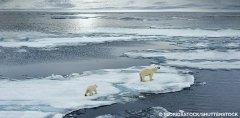 polar bears on thin ice