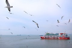 Seagulls on grey ocean against blue sky with red ferry boat