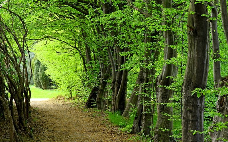 Tree-Lined Path-Green-Financing