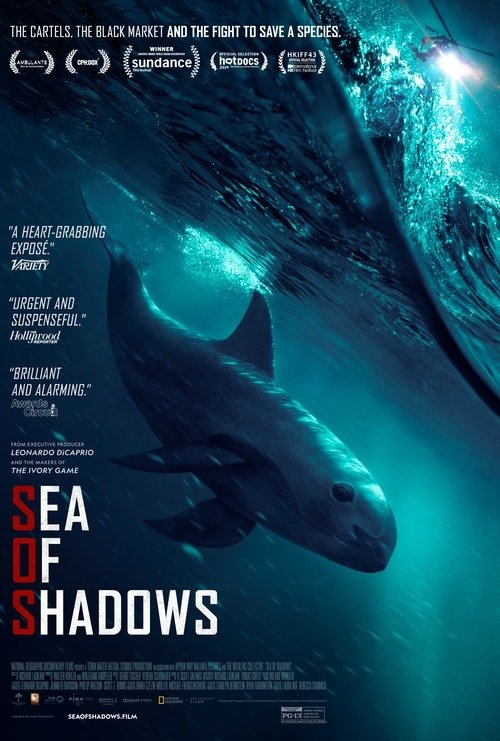 Film poster showing the endangered vaquita whale