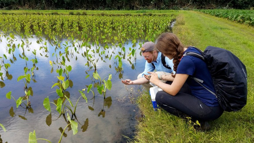 A student intern works in the field taking samples from a pond.