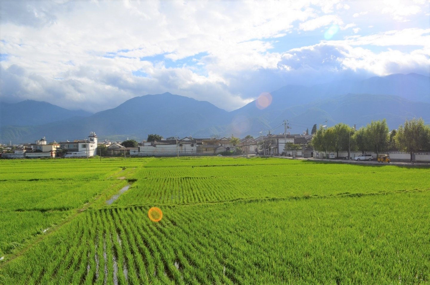 View from the Linden Centre. A rice field.