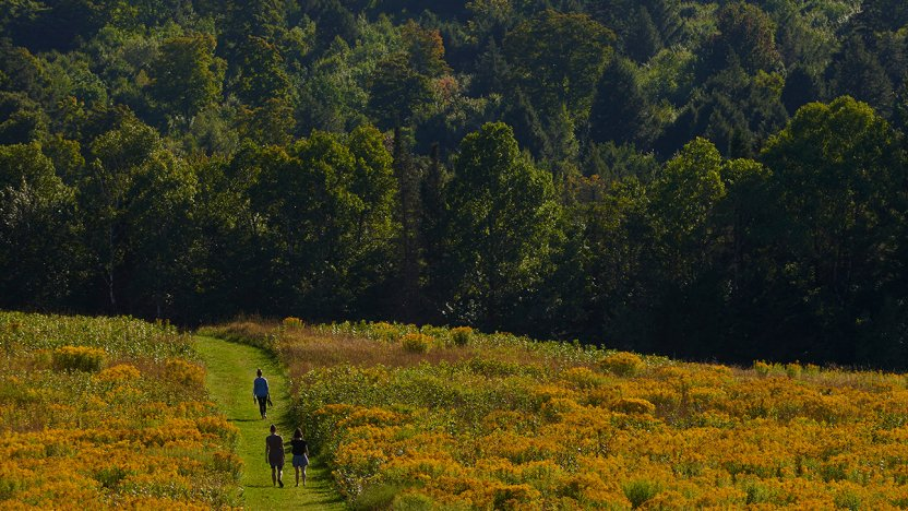 Three BLWC students walk through a field on the Bread Loaf campus.